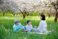 Young family picnicking in blooming apple garden Royalty Free Stock Photo