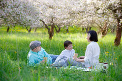Young family picnicking in blooming apple garden Royalty Free Stock Photography