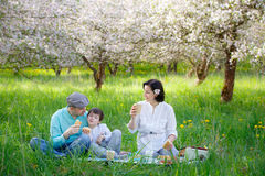 Young family picnicking in blooming apple garden Stock Photography