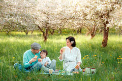 Young family picnicking in blooming apple garden Royalty Free Stock Photos