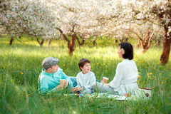 Young family picnicking in blooming apple garden Stock Photos