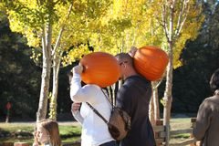 California. USA. October 2012. A young family with pumpkins on their shoulders goes to celebrate Halloween royalty free stock photography