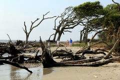 Young family walking along Driftwood Beach,Jekyll Island,2015 Stock Photography