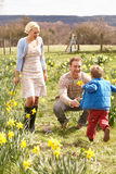 Young Family Walking Amongst Spring Daffodils Royalty Free Stock Images