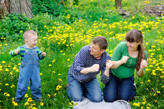 Young family walking on the meadow with yellow flowers in spring Stock Photography