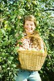 Young farm girl picking apples Royalty Free Stock Images
