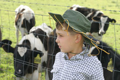 Young farmer amongst dairy cows. Little farmer boy with dairy cattle Stock Photo