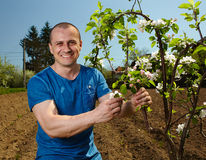 Young farmer with an apple tree stock photos