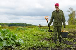 Young farmer carries a bucket of potatoes Royalty Free Stock Images