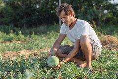 Young farmer checking his watermelon field at organic eco farm. Farmer controlling grow his product Stock Images