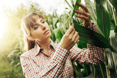 Young farmer checking plants in the field Stock Photo