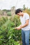 Young farmer Royalty Free Stock Photos