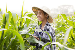 Young farmer in corn fields. Young farmer enjoying in corn fields with happy face Stock Images