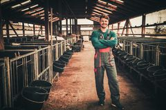 Young farmer in a cowshed on a dairy farm stock images