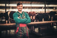 Young farmer in a cowshed on a dairy farm stock photo