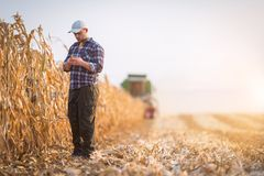 Young farmer examine corn seed in corn fields Royalty Free Stock Photo