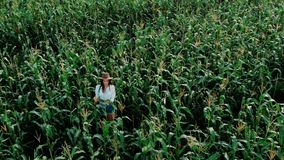 Young farmer girl in a hat, on a corn field, goes through the tall corn stalks in the sun, drone shoot. Modern farming