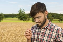 Young farmer inspecting crop Royalty Free Stock Photos
