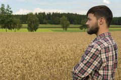 Young farmer inspecting crop Royalty Free Stock Image