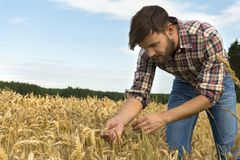 Young farmer inspecting crop Royalty Free Stock Images