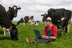Young farmer with laptop in field with cows royalty free stock photography