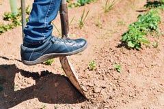 Young farmer man digging in an organic orchard Stock Photos