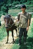 young farmer man with his horse around their family fields stock photo