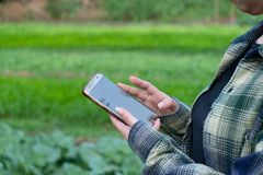 Young farmer observing some charts vegetable filed in mobile phone, Eco organic smart farm 4.0 technology concept, Agronomist in A stock photography