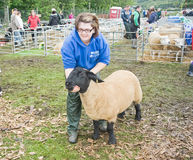 Young farmer presenting her sheep at Granmtown. Royalty Free Stock Image