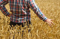 A young farmer's hand above a wheat field with selective focus. Royalty Free Stock Image