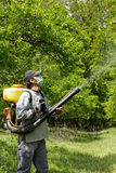 Young farmer spraying the trees with chemicals. In orchard Royalty Free Stock Image
