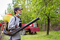 Young farmer spraying the trees with chemicals. In orchard Royalty Free Stock Photo
