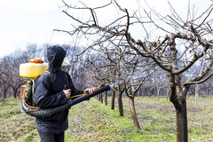 Young farmer spraying the trees with chemicals Royalty Free Stock Photos