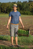 Young farmer standing on the field and holding wood box with parsley plant. Young farmer in hat standing on the field and holding wood box with fresh harvest of Royalty Free Stock Image