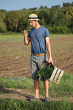 Young farmer standing on the field and holding wood box with parsley plant. Young farmer in hat standing on the field and holding wood box with fresh harvest of Stock Image