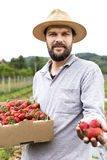 Young farmer in a strawberry field presenting his harvest,red f Stock Photos