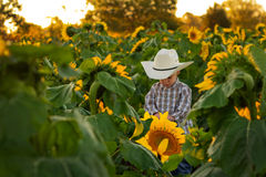 Young Farmer in Sunflower Field Royalty Free Stock Image