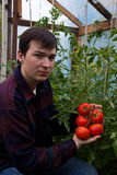 Young farmer with tomatoes Stock Images