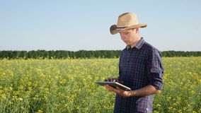 A young farmer uses a digital tablet. Young man farmer working on the rapse field. It uses a digital tablet stock footage