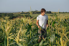 Young farmer walking on field during harvest. At organic eco farm Royalty Free Stock Photo
