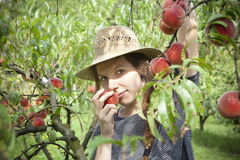 Young farmer woman with plait and straw hat who sniff a fresh peach from tree Stock Image