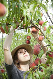 Young farmer woman with straw hat who gathers peaches from tree Stock Photo