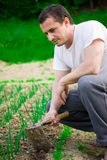 Young farmer working Royalty Free Stock Photos