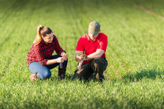 Young farmers examing planted wheat in the field. S royalty free stock photos