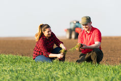 Young farmers examing  planted wheat while tractor is plowing fi Royalty Free Stock Photo