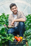 Young farmers are growing organic vegetables. Young farmers are grown and harvested organic vegetables Royalty Free Stock Photo