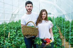 Young farmers are harvesting organic vegetables. Young farmers are grown and harvested organic vegetables Stock Photo