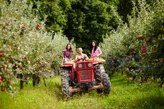 Young farmers on a tractor in the apple orchard Royalty Free Stock Photo