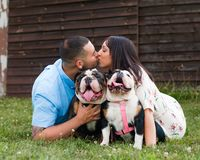 Young Happy Couple Kissing with English Bulldogs. A young, fashionable, engaged couple kisses with their two happy English Bulldogs royalty free stock image