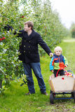 Young father and adorable little toddler boy picking organic app Stock Photography